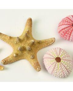 Urchins and Starfish Pack